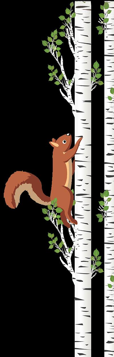 Squirrel Birch Tree with Squirrel